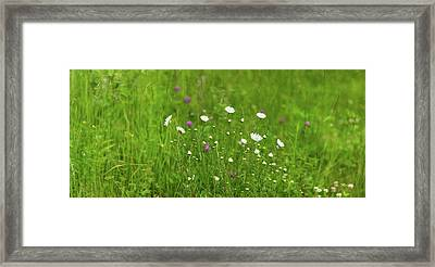Wildflowers In A Field, Gooseberry Framed Print by Panoramic Images