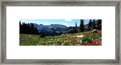 Wildflowers In A Field, Rendezvous Framed Print by Panoramic Images