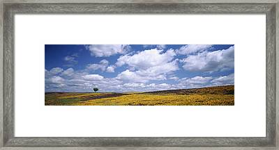 Wildflowers In Bloom, Table Mountain Framed Print