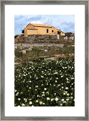 Wildflowers In Delos Framed Print by John Rizzuto
