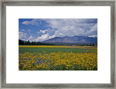Framed Print featuring the photograph Wildflowers In Flag 9611 by Tom Kelly