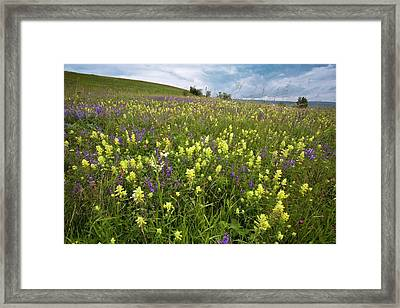 Wildflowers In Hay Meadow Framed Print by Bob Gibbons