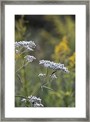 Wildflowers In September 2012 Framed Print
