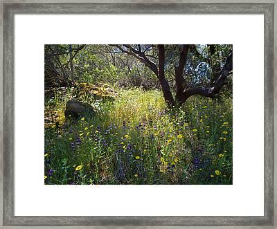 Wildflowers In Sierra Nevada Foothills In Park Sierra-ca Framed Print by Ruth Hager