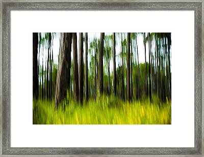 Wildflowers In The Forest Framed Print