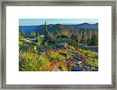 Wildflowers In The Whitefish Range Framed Print by Chuck Haney