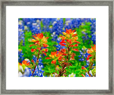 Wildflowers Framed Print by John Babis