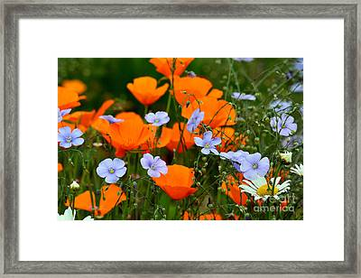 Framed Print featuring the photograph Gabriella's Flowers by Lisa L Silva