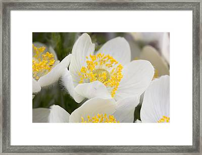 Framed Print featuring the photograph Wildflowers Mt Rainier National Park by Bob Noble Photography