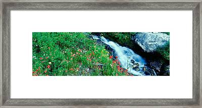 Wildflowers Near A Stream, Grand Teton Framed Print