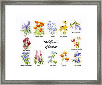 Wildflowers Of Canada Poster Framed Print