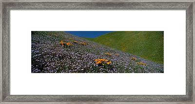 Wildflowers On A Hillside, California Framed Print