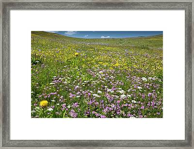 Wildflowers On A Mountainside Framed Print by Bob Gibbons