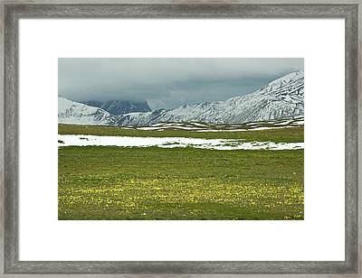 Wildflowers On Campo Imperatore Framed Print by Bob Gibbons