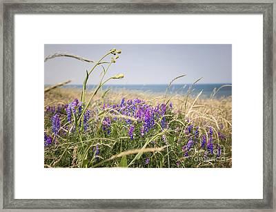 Wildflowers On Prince Edward Island Framed Print by Elena Elisseeva