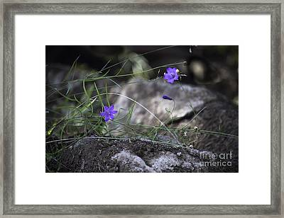 Wildflowers On Rocks Framed Print