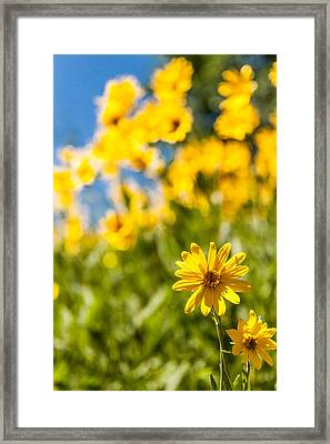 Wildflowers Standing Out Abstract Framed Print