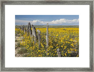 Wildflowers Surround Rustic Barb Wire Framed Print by David Ponton