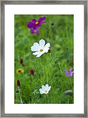 Wildflowers Tamed Framed Print by Teresa Dixon