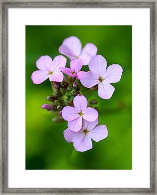 Wildflowers Framed Print by Tracy Male