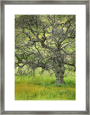 Wildflowers Under Oak Tree - Spring In Central California Framed Print by Ram Vasudev
