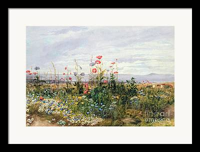 Garden Of Daisies Framed Prints