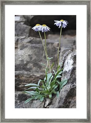 Wildflowers4 Framed Print by Aaron Spong