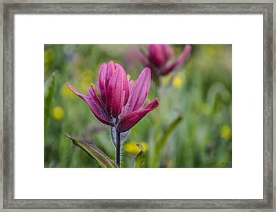 Wildflowers5 Framed Print by Aaron Spong
