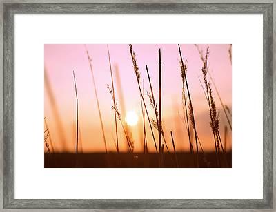 Wildgrass Sunset Framed Print by David Schoenheit