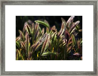 Framed Print featuring the photograph Wildgrasses by Richard Stephen