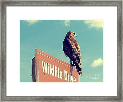Wildlife Drive Greeter Framed Print
