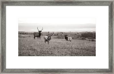 Wildlife Old School Framed Print