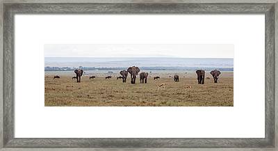 Wildlife On The Masai Mara - Kenya Framed Print by June Jacobsen