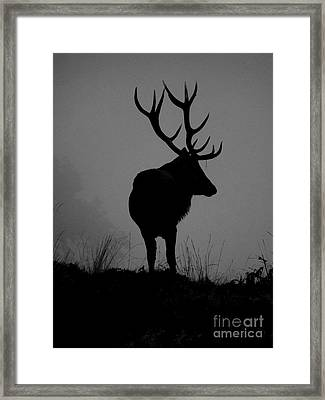 Wildlife Monarch Of The Park Framed Print