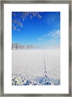 Framed Print featuring the photograph Wildlife Tracks by Kennerth and Birgitta Kullman