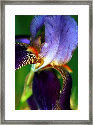 Wildly Colorful Framed Print