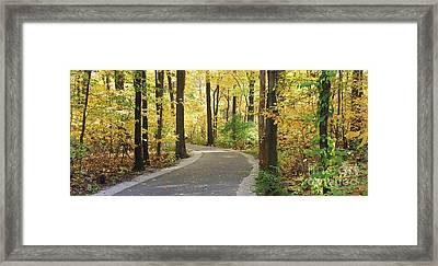 Wildwood Path Framed Print