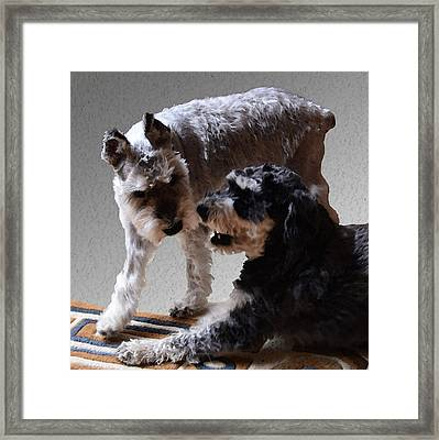 Will And Atticus Framed Print