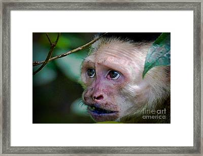 Will Work For Food Framed Print by Gary Keesler