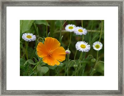 Framed Print featuring the photograph Will You Be My Friend? by Cindy McDaniel