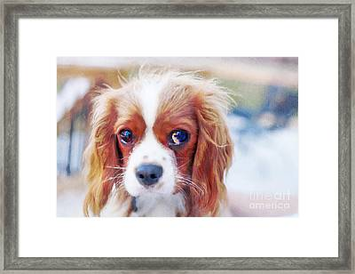 Will You Play With Me Framed Print by Kay Pickens