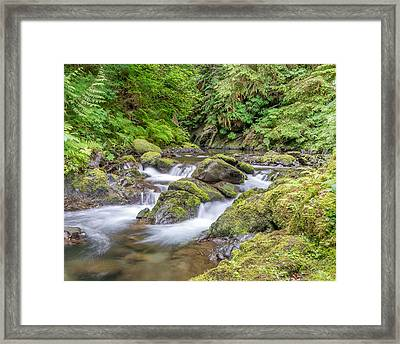 Willaby Creek Cascade - Olympic Peninsula Framed Print