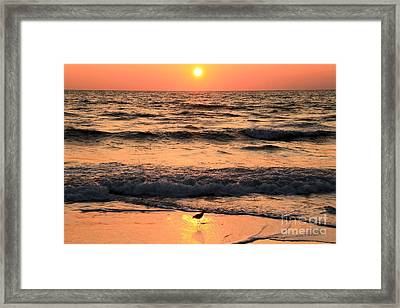 Willet In The Spotlight Framed Print by Adam Jewell