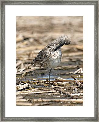 Willet Framed Print by James Peterson