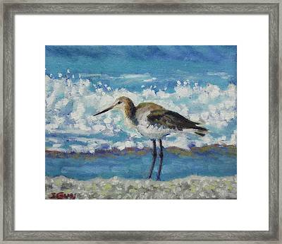 Willet Framed Print by Sharon Guy