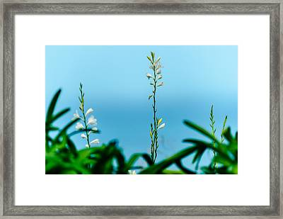 Willow At Me Feet Framed Print