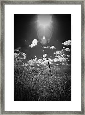 Willow Framed Print by Bradley R Youngberg