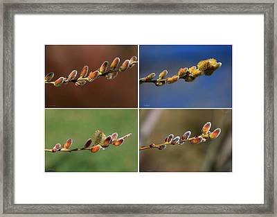 Willow Buds Collage Framed Print