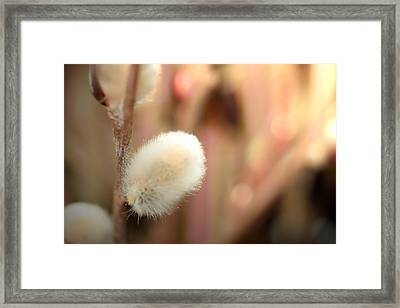 Willow Buds Fine Art Print Framed Print