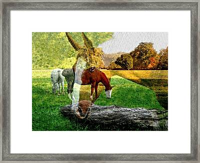 Willow Framed Print by Diana Angstadt